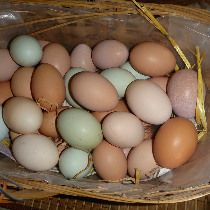 Multi-coloured free range eggs